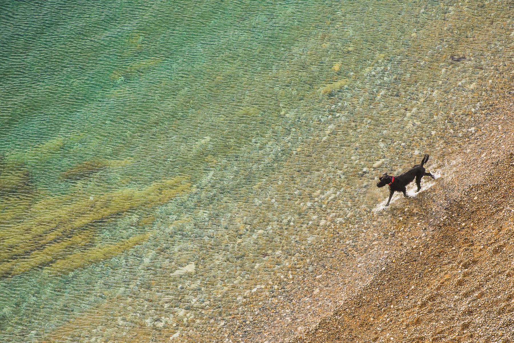 Dog Paddling in the sea in Dorset