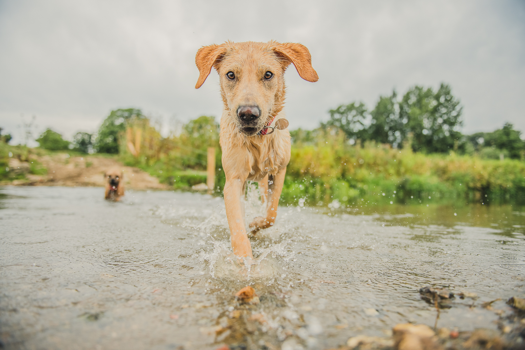dog coming out of River