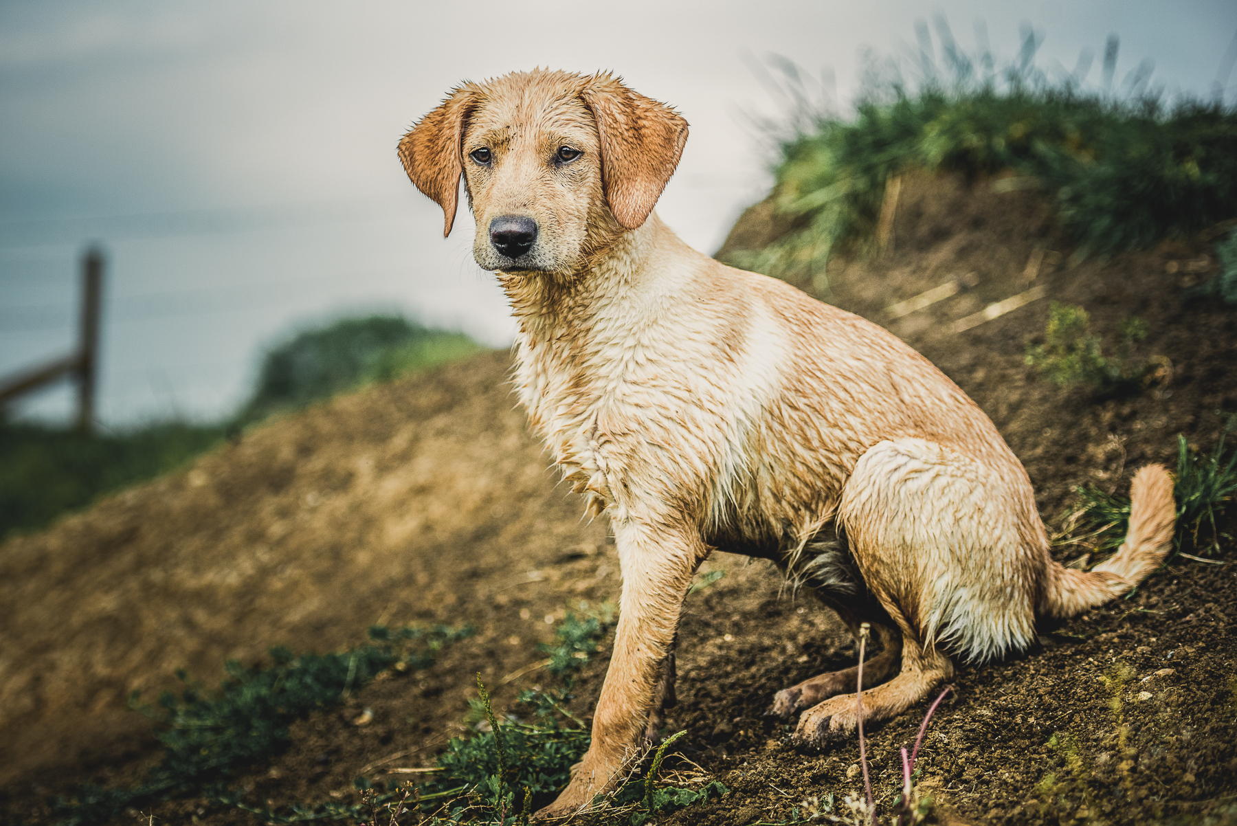 Wet dog sitting on a dirt bank