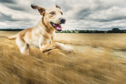 Blurry image of dog running through a field