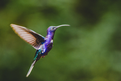 Side view of hummingbird
