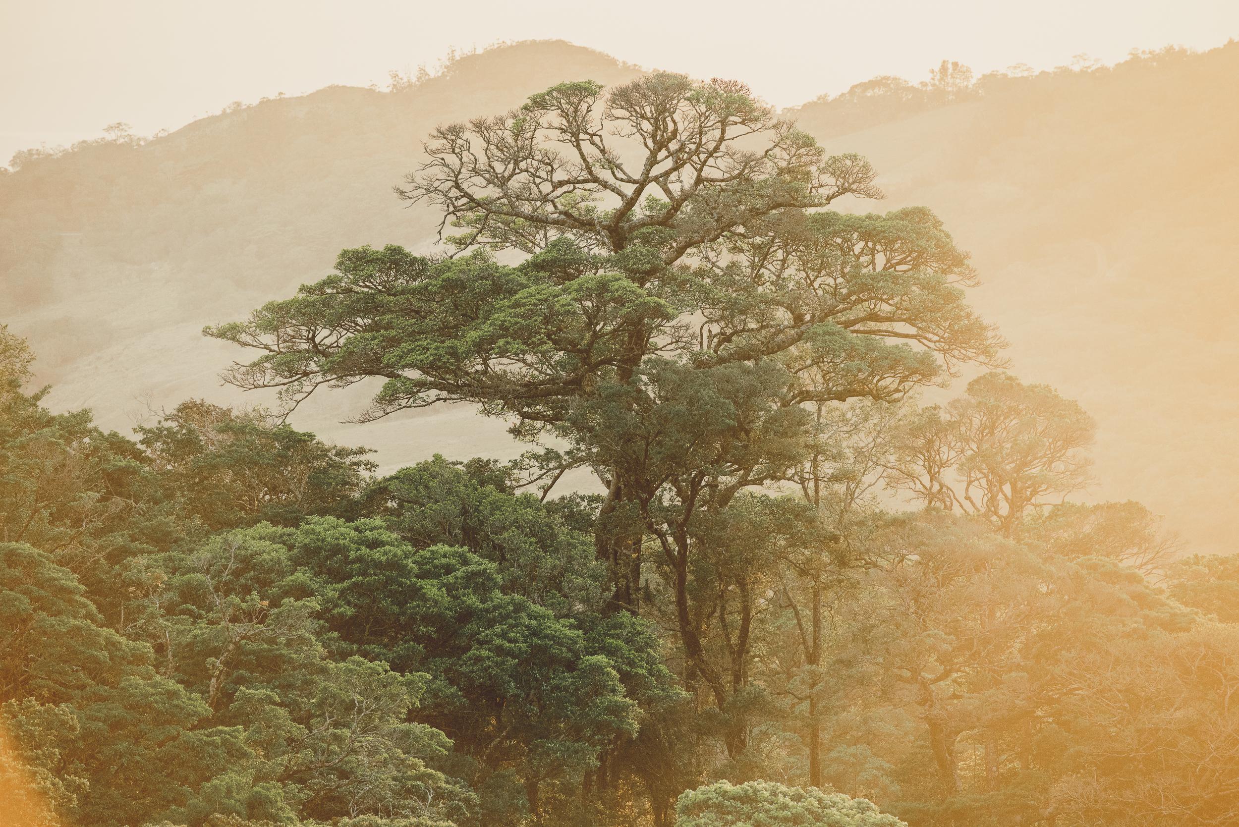 Rainforest at dawn