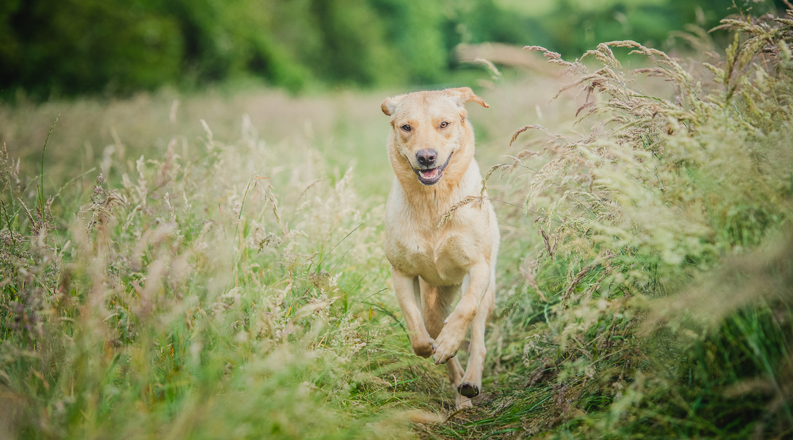 dog photography course in Oxfordshire