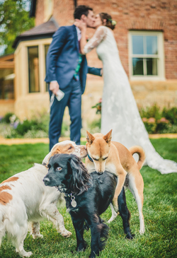 Funny Photo of dogs at a wedding