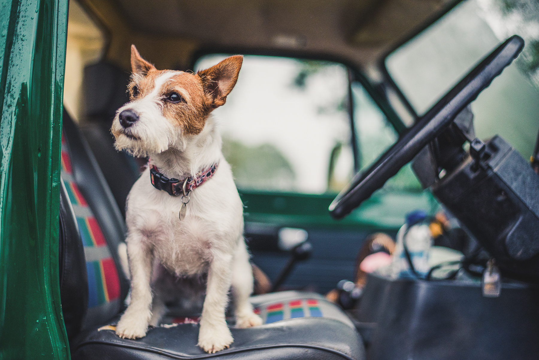 Jack Russell sitting in front seat of Land Rover