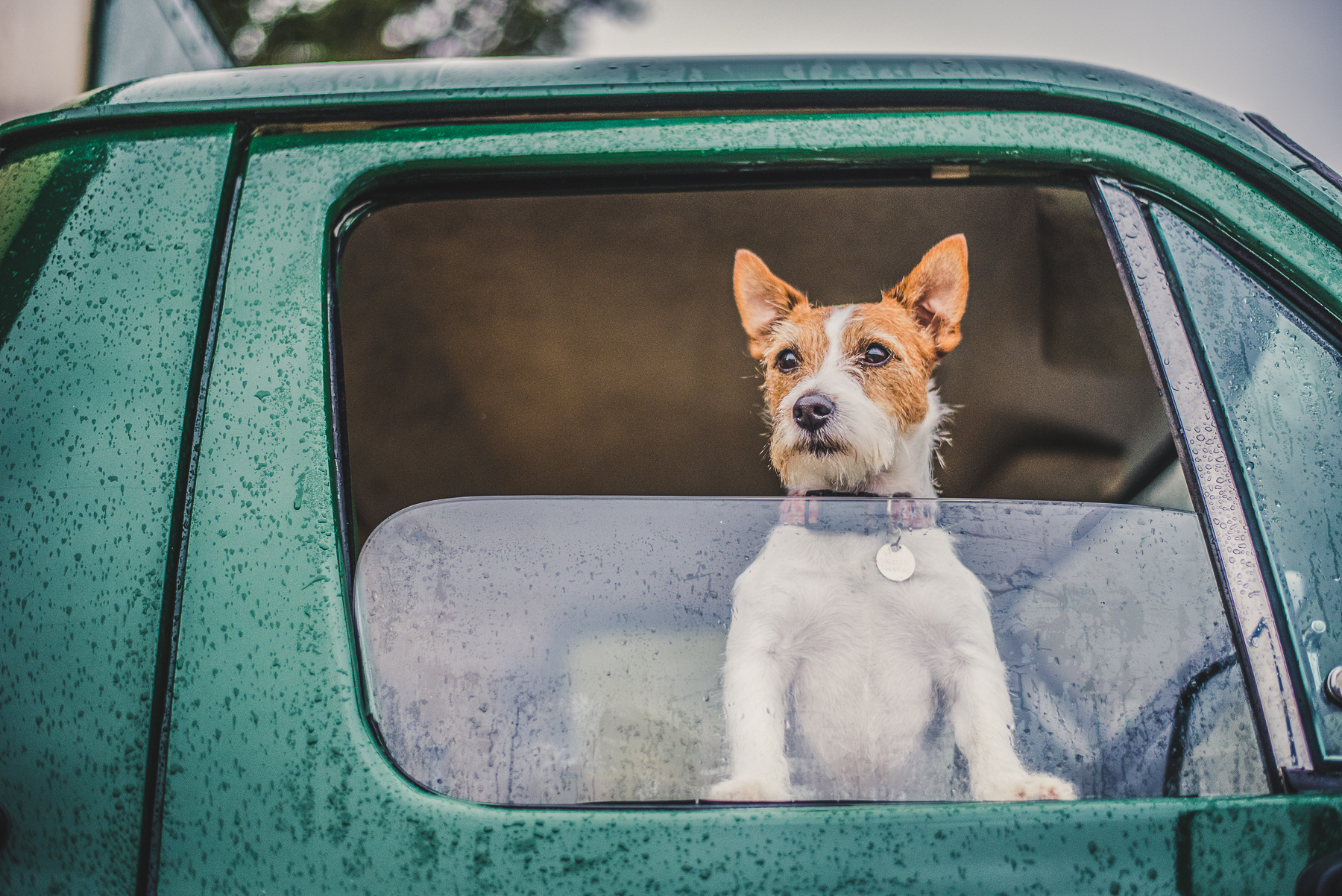 Jack Russell looking out of the window of a Land Rover