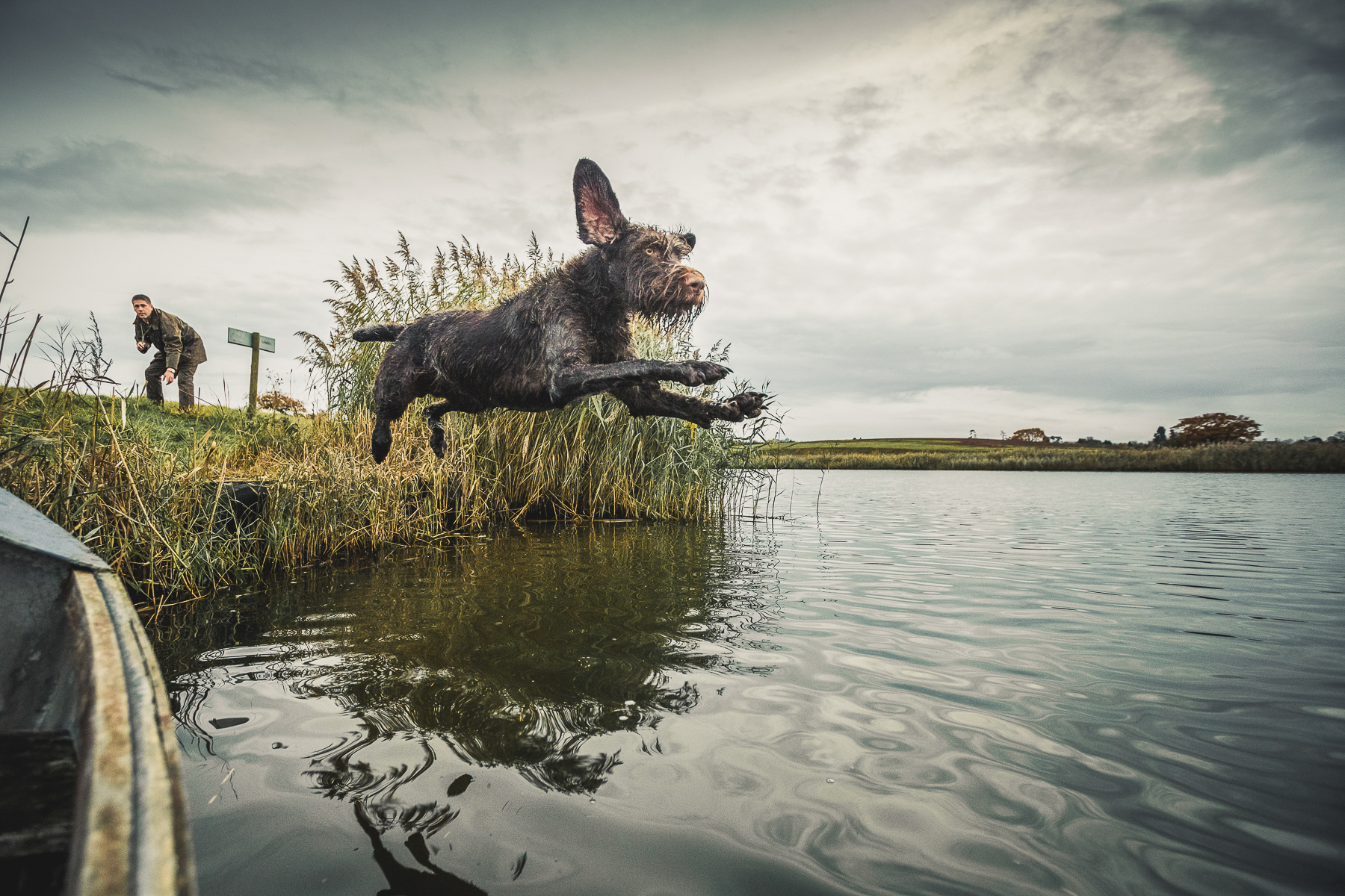 Dog leaping into River after fallen Game
