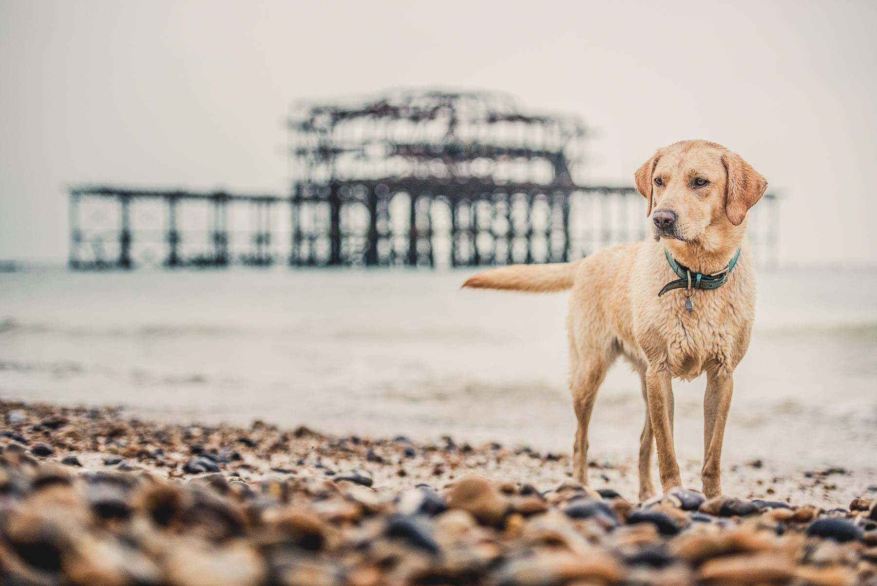Dog standing next to old brighton pier