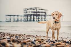 Dog standing next to old brighton pier