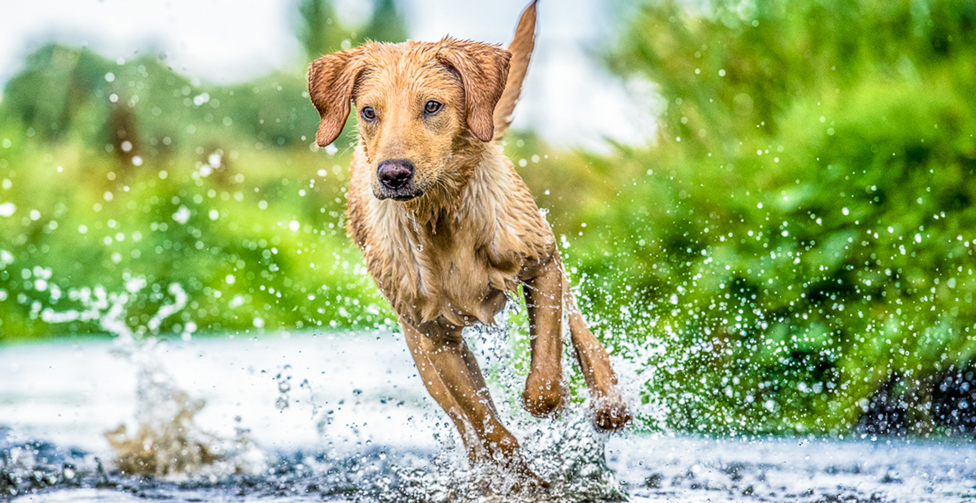 commercial editorial dog photographer in uk