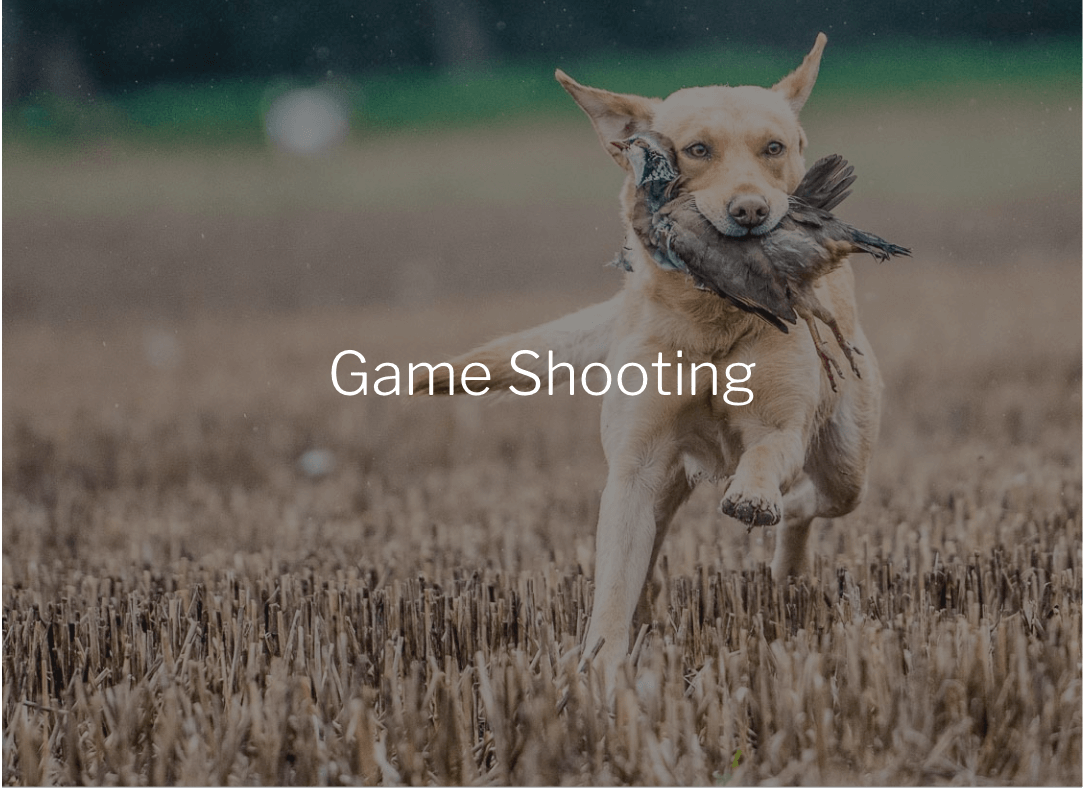 game-shooting photography, game shooting photography, pheasant shooting photographer, driven pheasant shooting photos, photographs of pheasant shooting, game-shooting photos, shooting times photograpehr, countrylife photographer, commi