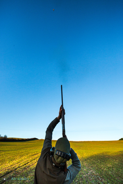 vertical image of a gun shooting a high pheasant