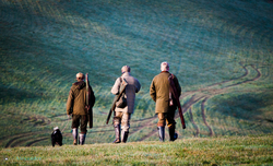 3 guns and gun dog walking in the landscape on a pheasant shoot