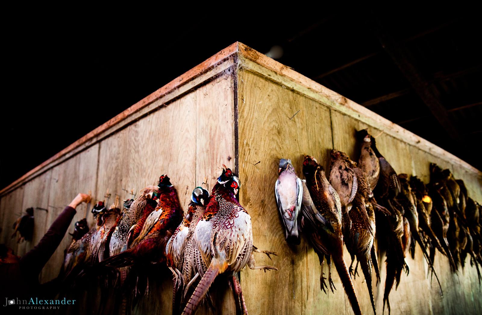 shot pheasants hanging in a barn