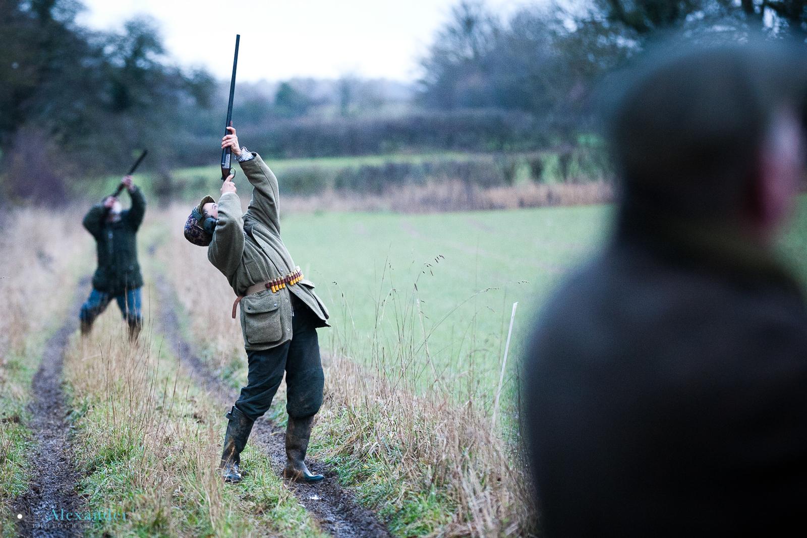 looking down the line of guns shooting pheasants