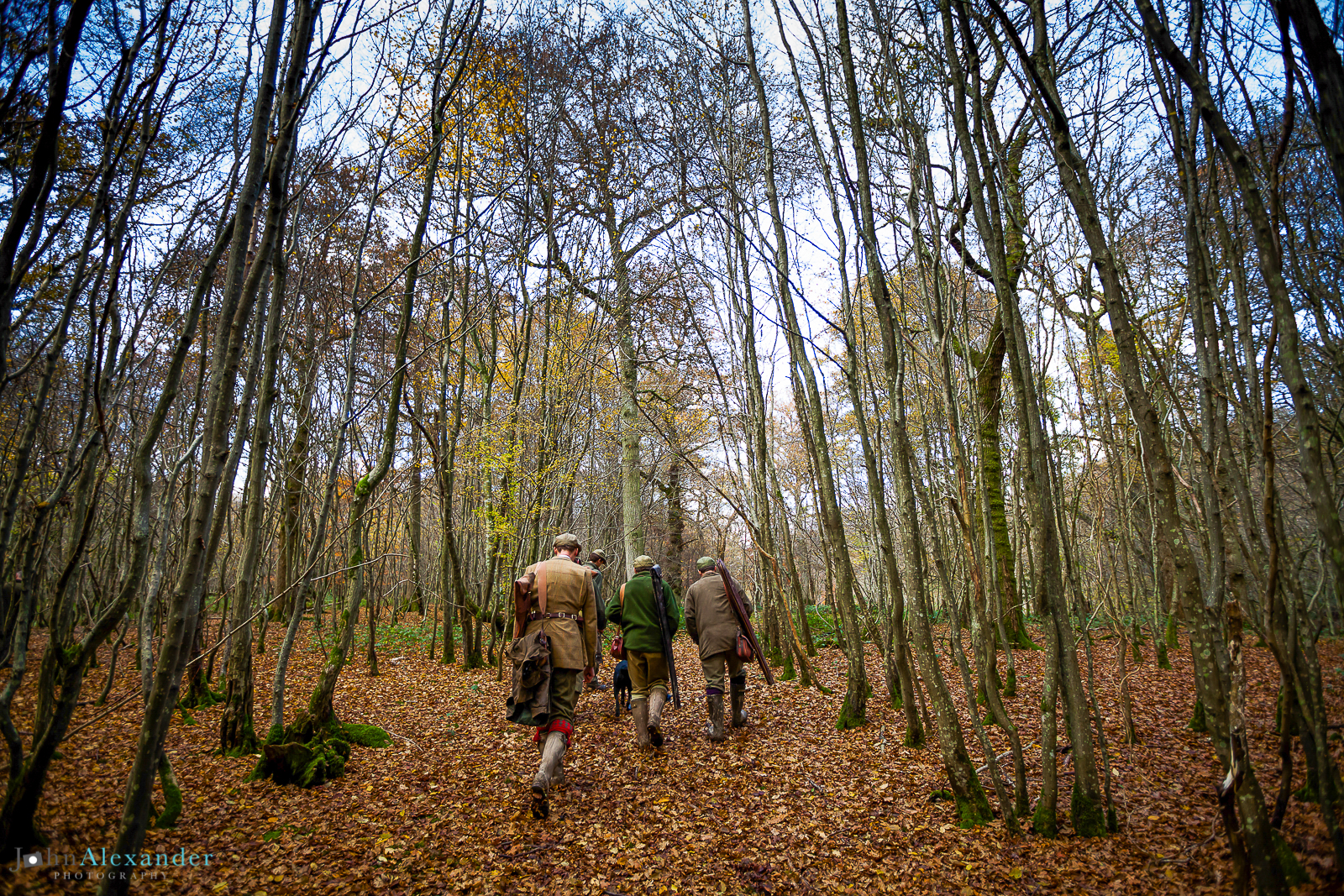 guns walking through the woods on a driven pheasant shoot