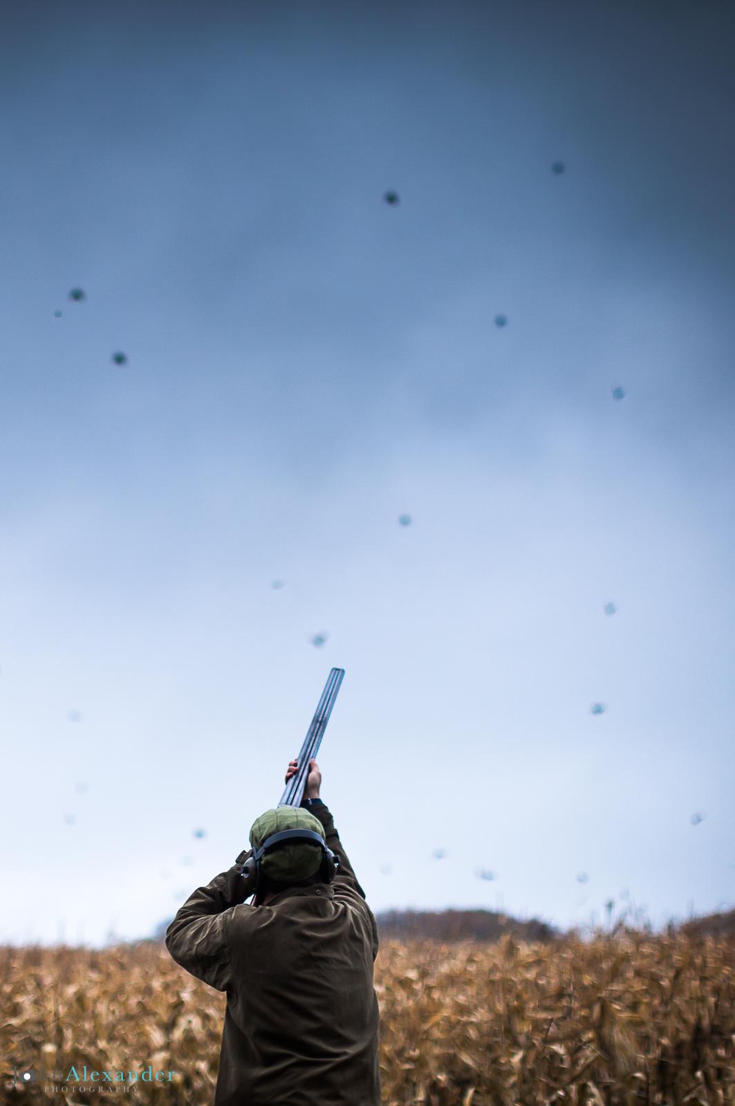 vertical image of gun shooting high flush of pheasants