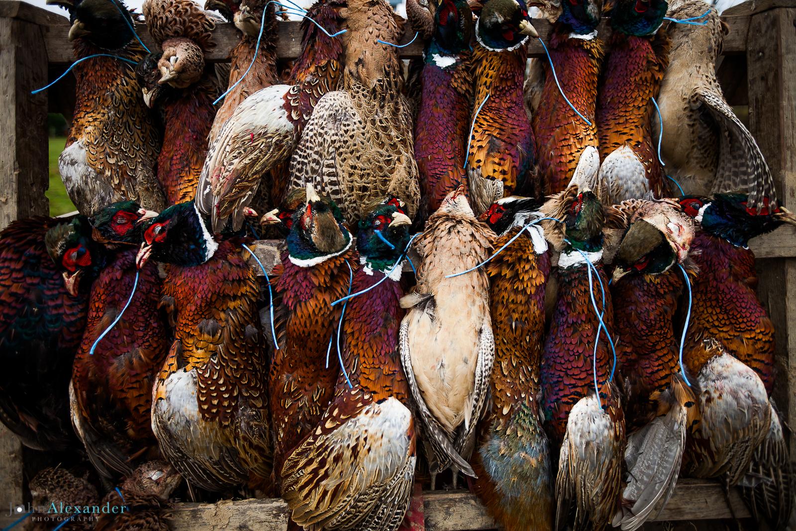 shot pheasants hanging on trailer