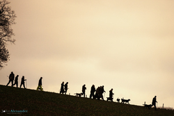 silhouette of beaters on a ridge with gun dogs at sunset