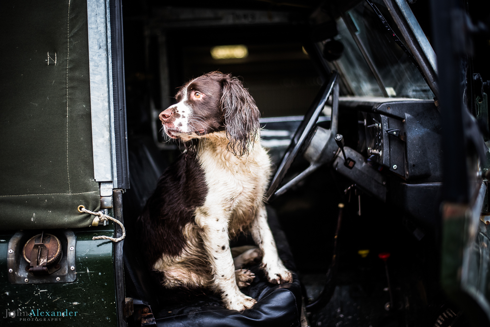 Springer Spaniel on front seat of Land Rover