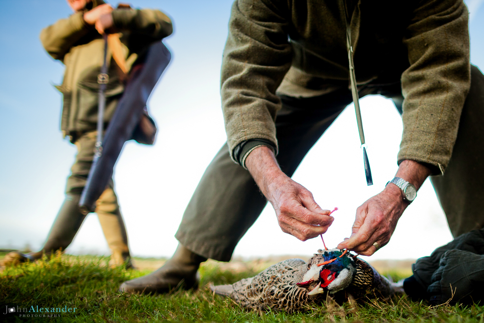 beaters tying up brace of pheasants
