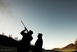 silhouette of a gun and his loader shooting high pheasants in Wales