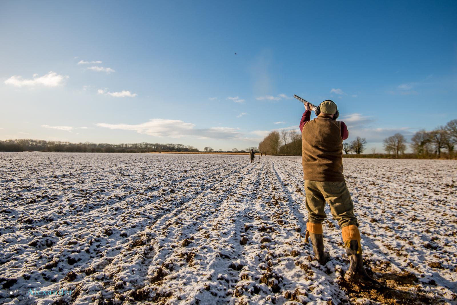 gun shooting pheasants in the snow