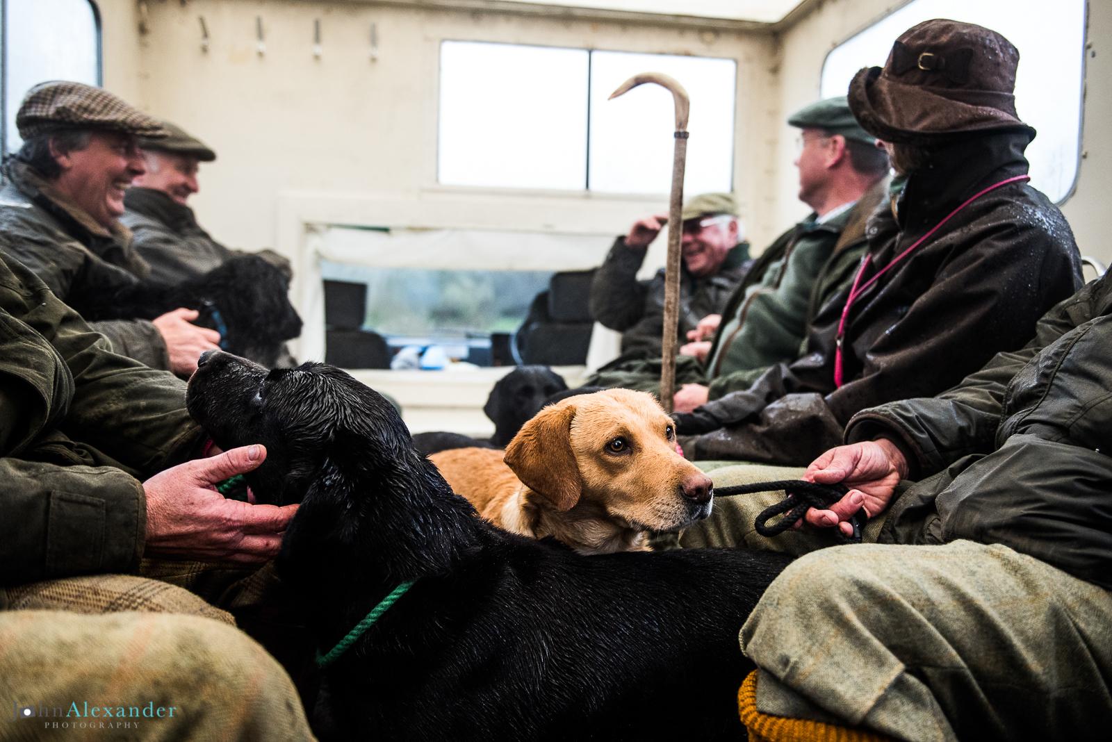 golden labrador gun dog and guns on shoot bus