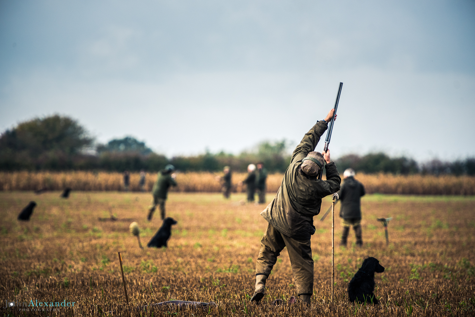 down the line of guns shooting on a pheasant drive in uk