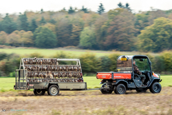 Game cart removing all the pheasants that have been picked up during the course of the shoot