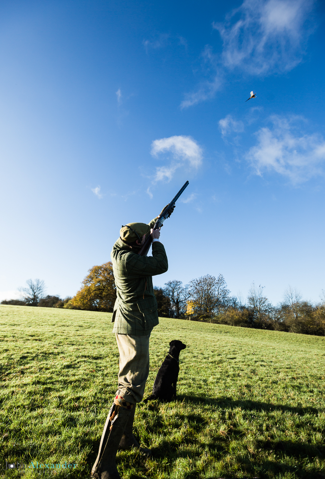 vertical image of gun shooting and gun dog with  pheasant in blue sky