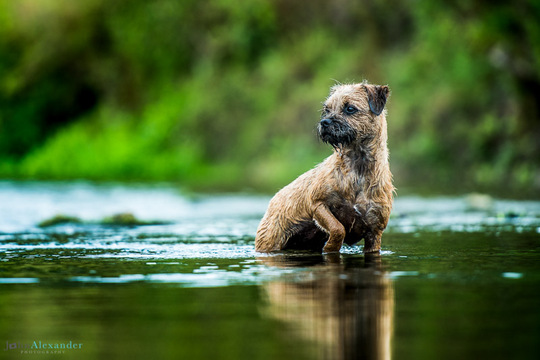 Dog photography course in Oxfordshire near London. One day course. Short course near London to improve your pet photography skills