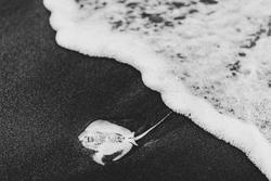 Dead Sting Ray on Beach