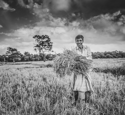 Man harvesting his crop