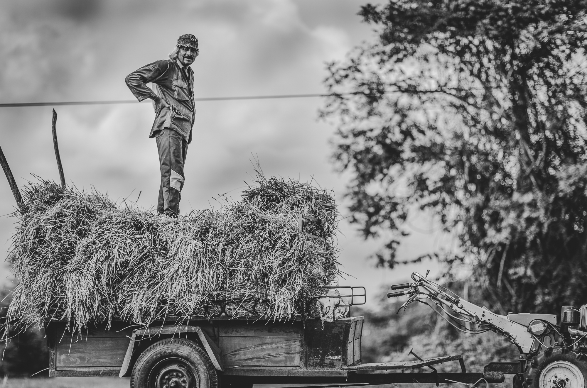 farmer standing on his crop
