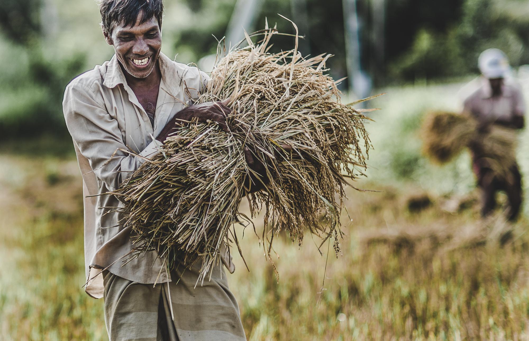 farmer bringing his crop