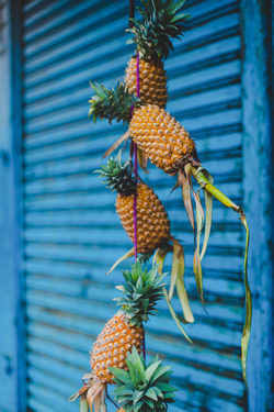 Pineapples for sale hung up
