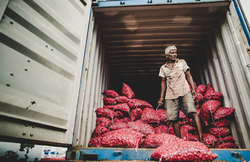 Unloading shallots from a truck
